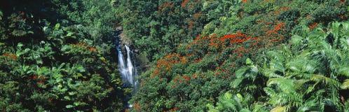 Tropikalna siklawa Fotografia Royalty Free