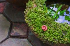 Tropikalna spirala wiele n?g insekt zdjęcie royalty free