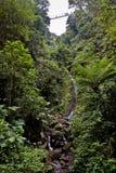 tropikalna tropikalny las deszczowy siklawa obraz stock