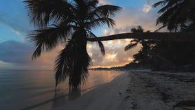 tropikalna wyspa Egzot plaża z palmami wokoło Wakacje i wakacje poj?cie zdjęcie wideo