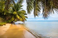 Tropikalna wyspa - morze niebo i drzewka palmowe, Obraz Royalty Free