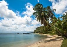 Tropikalna wyspa - morze niebo i drzewka palmowe, Zdjęcia Stock