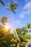 Tropikalna wyspa z drzewkami palmowymi zdjęcie stock