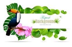 Tropikalna wyspy wiosna piękni rośliny adstract i zieleni półdupki royalty ilustracja