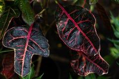 Tropikalna zieleń opuszcza na ciemnym tle, natury lata rośliny lasowy pojęcie fotografia royalty free