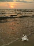 Tropikalna zmierzch plaża z naturalną Murex Ramosus skorupą Zdjęcie Stock