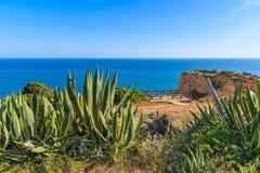 Tropikalne agaw rośliny na wybrzeżu Portugalia Obrazy Stock