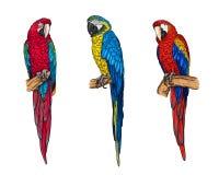 Tropikalne aron papugi inkasowe zdjęcie royalty free