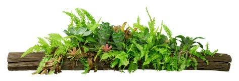 Tropikalne dżungli rośliny na szalunku drzewie odizolowywającym na białym tle z ścinek ścieżką zawierać zdjęcie stock