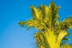 tropikalne dłonie Zdjęcia Royalty Free