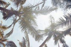tropikalne dłonie Obraz Stock