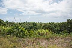 Tropikalne flory: Aluzja ocean Obraz Royalty Free