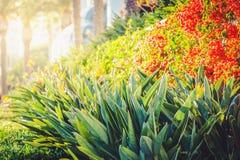 Tropikalne flory Santa Monica deptak Zdjęcie Stock