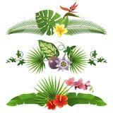 Tropikalne granicy Obraz Stock