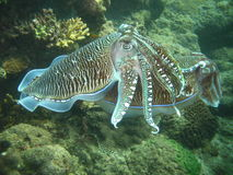 tropikalne morza życia Zdjęcia Royalty Free