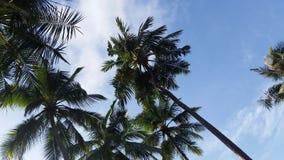 tropikalne niebo Zdjęcia Stock