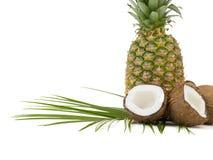 Tropikalne owoc odizolowywać na białym tle obraz royalty free