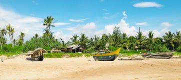 tropikalne plażowe palmy Zdjęcie Royalty Free