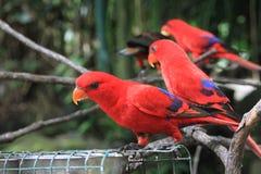 tropikalne ptaków Obraz Stock