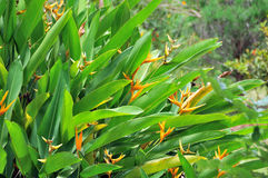 tropikalne rośliny Zdjęcia Stock