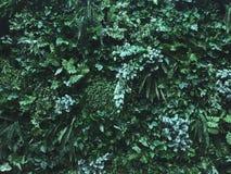 Tropikalne rośliny dla bujny zielenieją tła zakrywających na ścianie zdjęcia royalty free