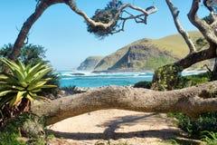 Tropikalne rośliny i drzewa na plaży obrazy stock