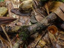 Tropikalne rośliny w Obłocznym Lasowym środowisku fotografia royalty free