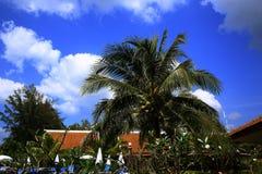 Tropikalne rośliny w ziemiach hotel, plaża i drzewa, Phra Ae plaża, Ko Lanta, Tajlandia Zdjęcie Royalty Free