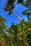 Tropikalne rośliny w ziemiach hotel, plaża i drzewa, Phra Ae plaża, Ko Lanta, Tajlandia Zdjęcia Royalty Free