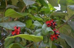 Tropikalne rośliny z całego świata zdjęcia stock
