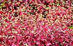 Tropikalne rośliny Zdjęcie Stock