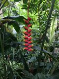 tropikalne rośliny Fotografia Stock