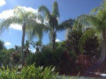 tropikalne rośliny Zdjęcia Royalty Free