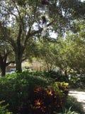 tropikalne rośliny Zdjęcie Royalty Free