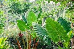 Tropikalne rośliny i kwiaty w fantazj rainfores Fotografia Royalty Free