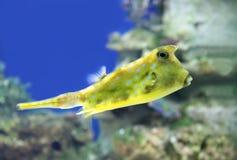 Tropikalne ryba Obraz Stock