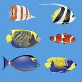 Tropikalne ryba Obrazy Stock