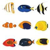 Tropikalne ryba Ustawiać Ilustracji