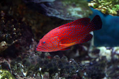 tropikalne ryby zdjęcia royalty free