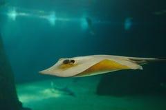 tropikalne ryby Zdjęcie Royalty Free