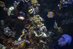 tropikalne ryby Obraz Royalty Free