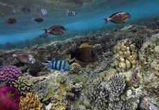 tropikalne ryby gili Indonesia wyspy lombok meno blisko dennego żółwia underwater światu Zdjęcia Stock