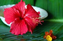 tropikalne spa Zdjęcia Royalty Free