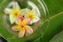 tropikalne spa Fotografia Royalty Free