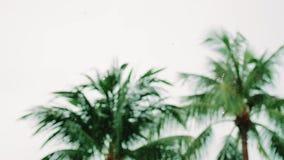 Tropikalne wiatru i deszczu krople spada na zielonym drzewku palmowym opuszczają w wyspy Koh Samui swobodny ruch 3840x2160 zdjęcie wideo