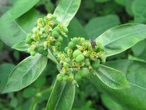 Tropikalne zielone rośliny kwiat, natury fotografia obrazy royalty free