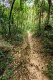 Tropikalnego lasu deszczowego ślad Obrazy Stock