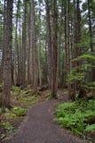Tropikalnego lasu deszczowego ślad Obraz Royalty Free