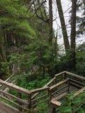 Tropikalnego lasu deszczowego Boardwalk Zdjęcie Royalty Free