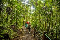 Tropikalnego lasu deszczowego ślad Zdjęcie Royalty Free